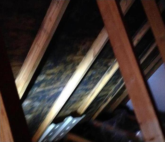 Roof Leak and Mold Damage in a Punta Gorda Attic Before
