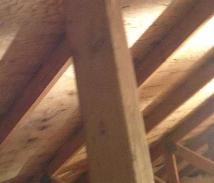 Roof Leak and Mold Damage in a Punta Gorda Attic After