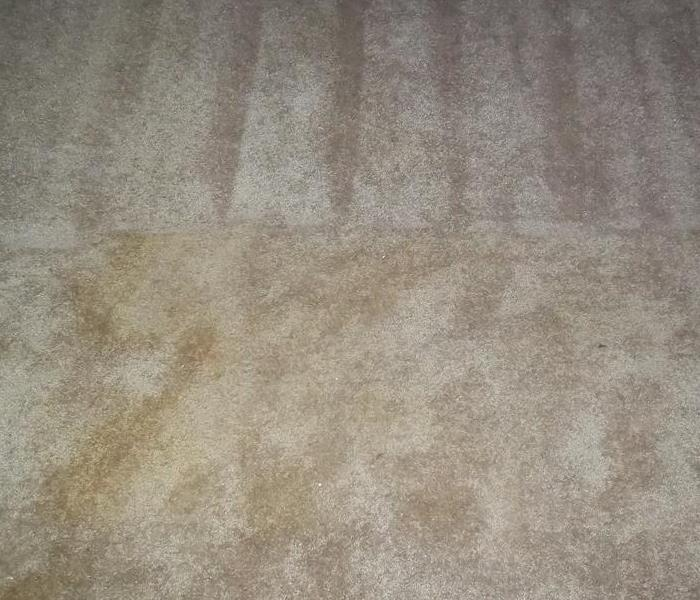 Removing Stains from Carpet in Punta Gorda Before