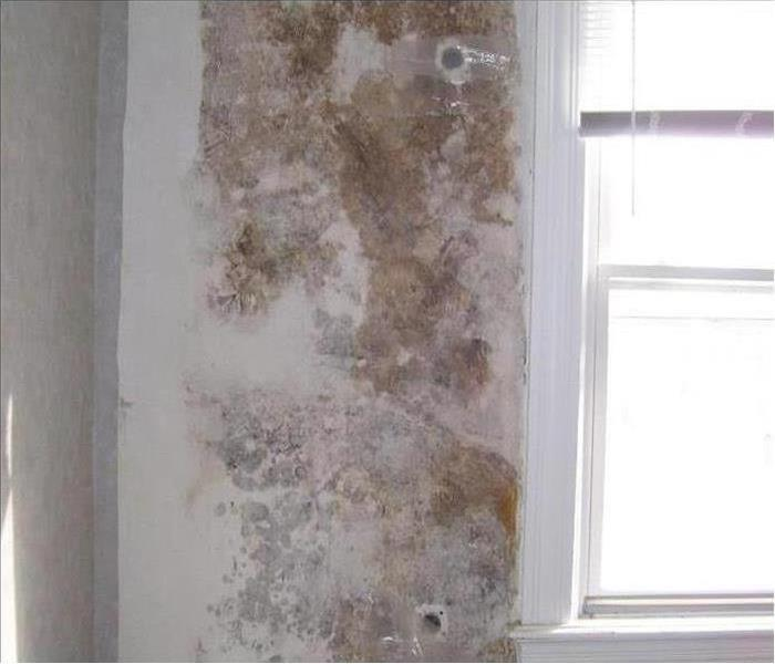 Mold Damage – Fort Myers Home