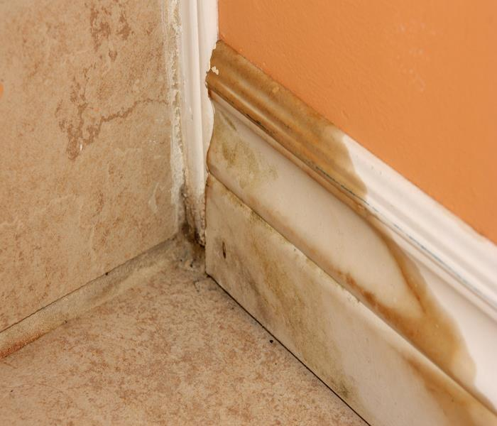 Mold Remediation The 9 Steps Of Boca Grande Mold Remediation Services