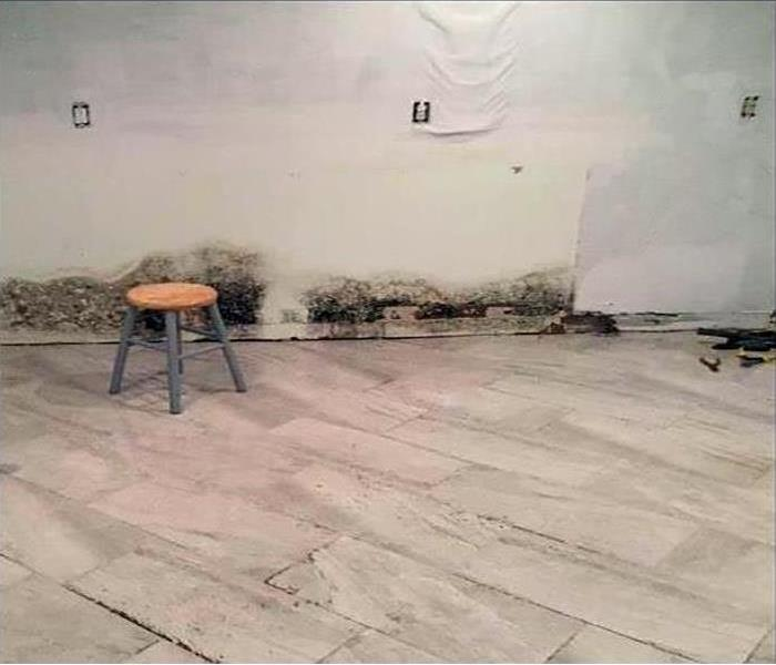 Black mold growth on wall and baseboards