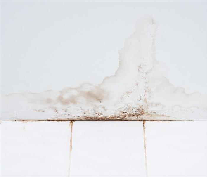 Mold Remediation Mold Damage Cleanup for Your Fort Myers Home