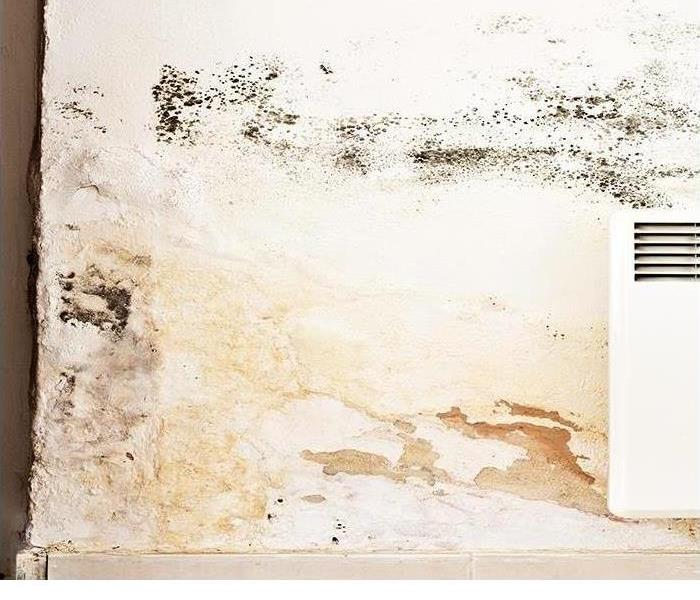 Why SERVPRO Contact A Mold Remediation And Restoration Company If You Find Mold In Your Fort Myers Home