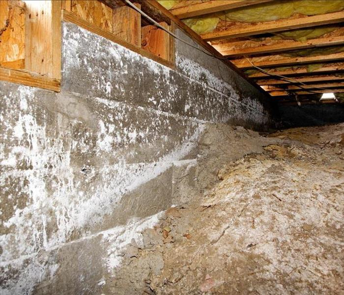 Mold Remediation Remediating Mold Damage In Your Fort Myers Home