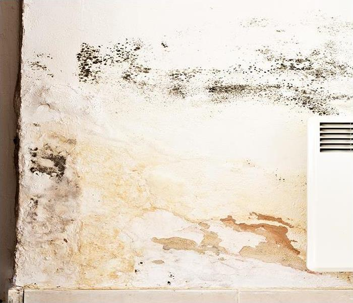 Mold Remediation Contact A Mold Remediation And Restoration Company If You Find Mold In Your Fort Myers Home