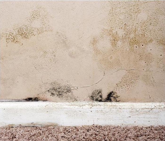Mold Remediation Understanding Mold Damage And Testing For Your Fort Myers Home